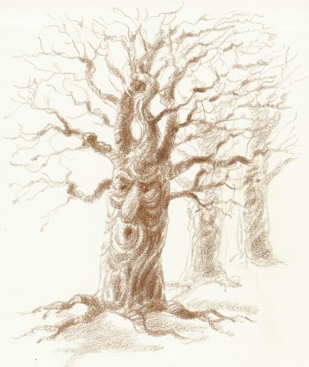 Drawings – trees